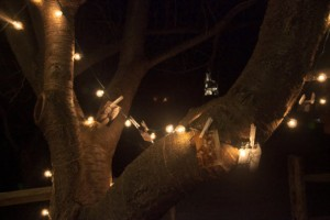 String-Lights-Slideshow-Tree