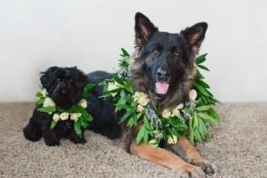 diy-pet-flower-wreath